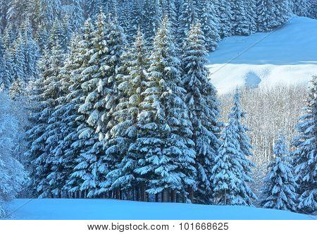 Winter Mountain Landscape (austria).
