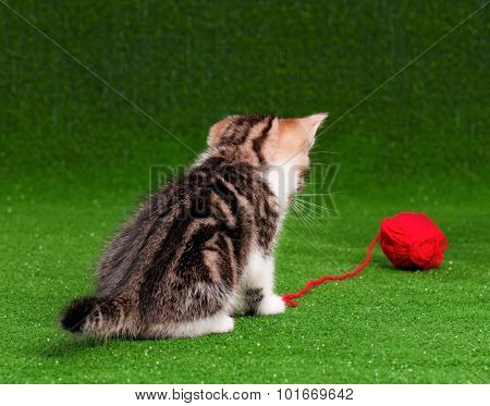 Cute kitten playing red clew of thread on artificial green grass