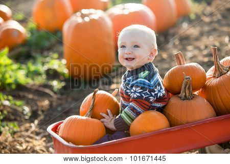 Little boy in a pumpkin patch