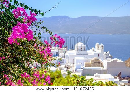Scenic View Of Traditional Greek Cycladic Village With Flowers Foreground