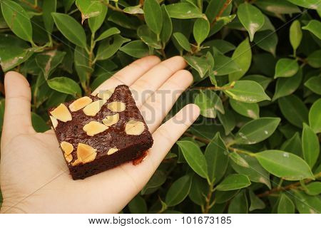 Brownie In Hand On A Background Of Green Leaves