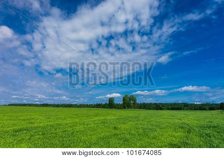 Fresh Landscape Grass Lawn