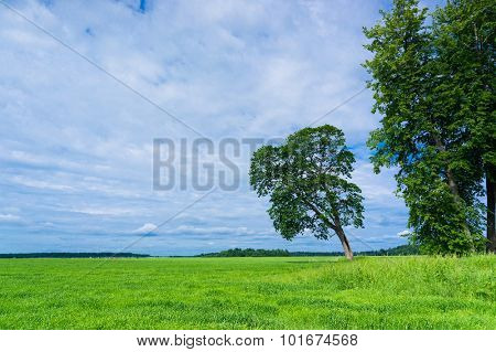 Lonely Tree Plain Nature