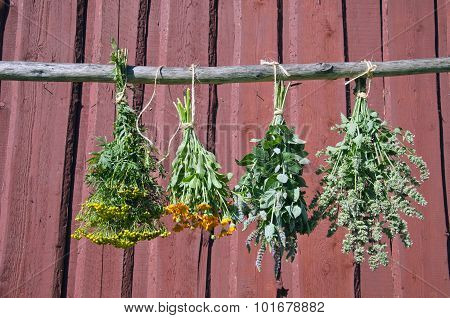 Herbs Hanging In Front Of Rustic Wooden Background