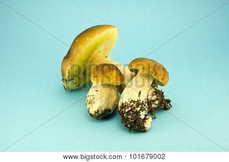Three Mushrooms Cap Boletus On Blue Background
