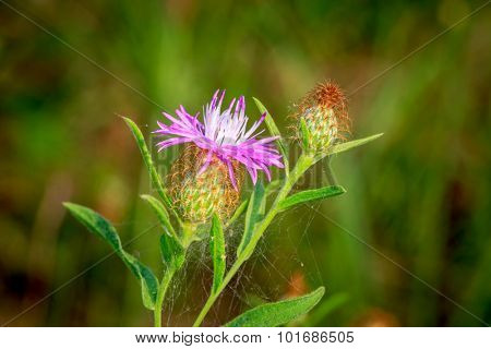 Abstract wild flowers in autumn time