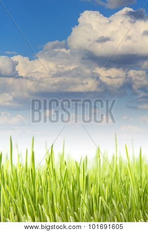 Wheat Field On A Background Cloudy Sky