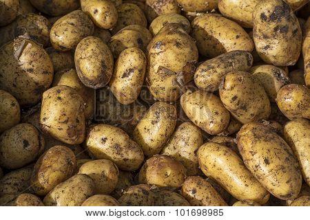 Organic New Potatoes, Food Background