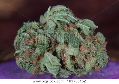Macro of Papaya Indica Medical Marijuana