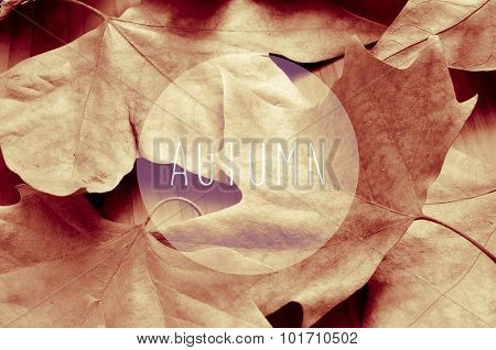 a pile of dried leaves and the text autumn in a circle, in sepia toning