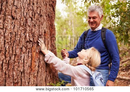Grandfather and granddaughter admiring a tree in a forest