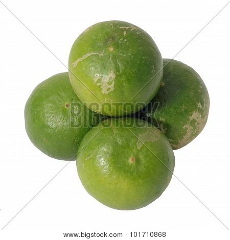 Key Lime Citrus Group