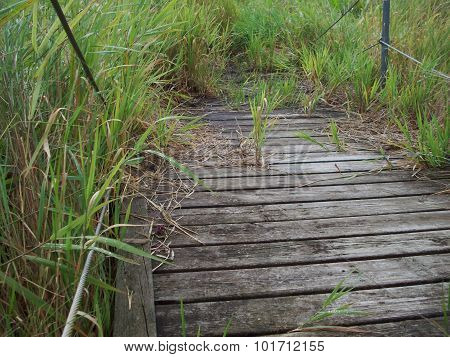 Boardwalk Through The Wetland