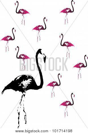 Flamingo Bird Background
