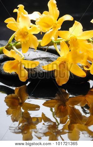 Branch yellow orchid on wet background