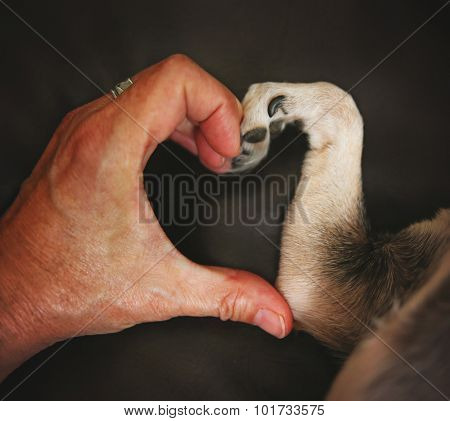 a person and a chihuahua dog making a heart shape with the hand and paw