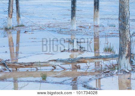 Dead Lodgepole Pines Landscape