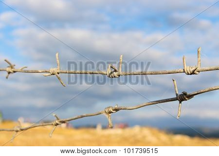 barbed wire on a background of blue cloudy sky and the yellow fields