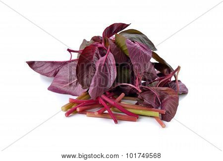 Fresh Red Spinach Or Red Amaranth On White Background