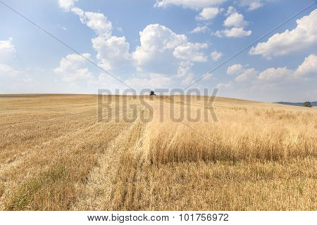 Harvester Combine Reaps A Wheat Field
