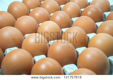 Egg, Chicken Egg on tray