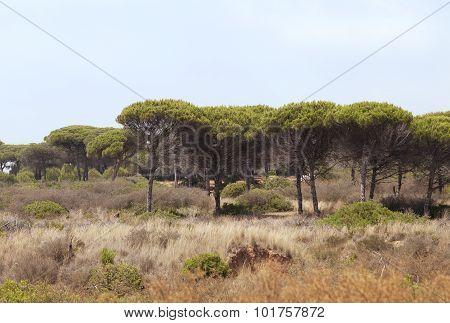 Wilderness In Spain