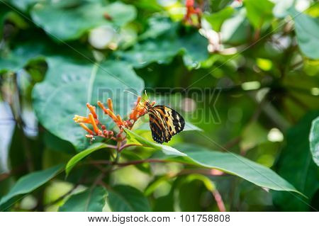 Black And Yellow Butterfly On Orange Flower