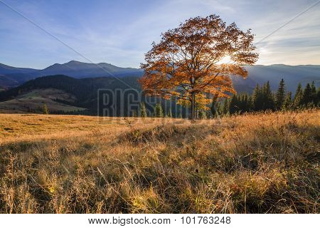 Beautiful Autumn Tree In The Sun Against The Backdrop Of Mountains.