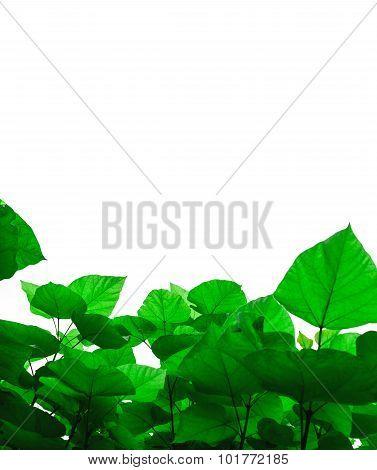 Bright Green Foilage
