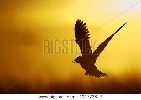 Single Gull Flying Against Yellow Background .
