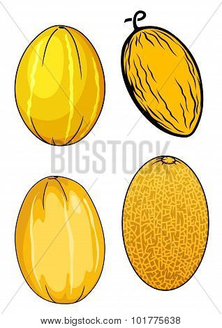 Ripe isolated yellow melon fruits