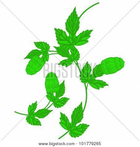 Hop cone and leaf - wavy twig