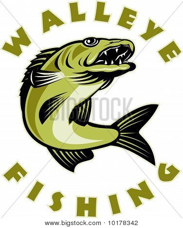 walleye Fishing fish