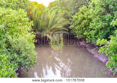 Mangrove forest with sunshine at low tide.