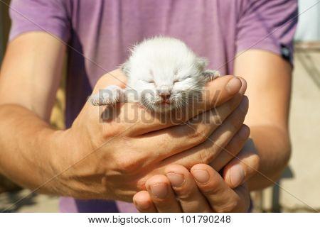Newborn kitten in male hands, closeup
