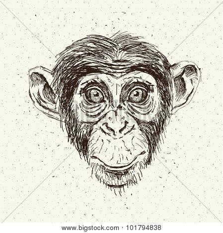 Sketch monkey face.