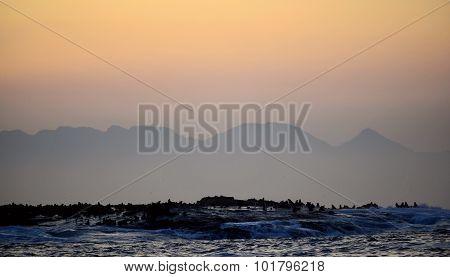 Sea Lion Silhouette Against A Sunset Landscape Seal Island