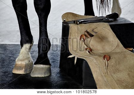 Farrier Tools On Bench Next To Horse