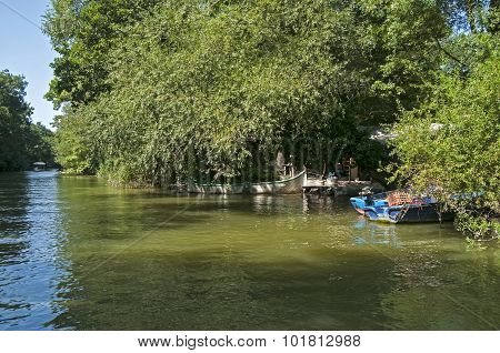 Riverbank with verdure and boats