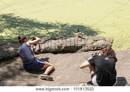 Turtle Pond In Central Park In New York