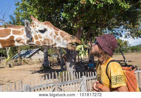 Giraffes in Kruger park South Africa