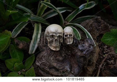 Still Life Photography, Double Skull In The Backyard.