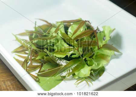 Fresh Green Olive Leaves And Lettuce Leaves On White Plate For Food Or Cooking Concept (selective Fo