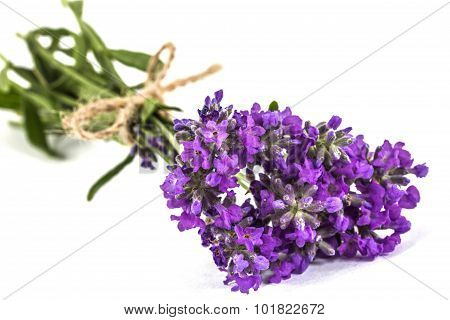 Bouquet Of Violet Wild Lavender Flowers, Tied With Bow, Isolated On White