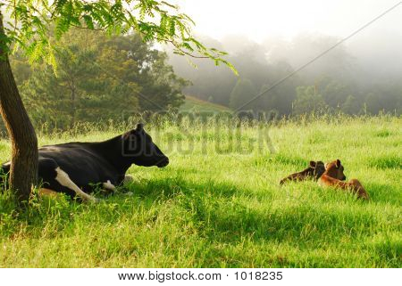 Mother Cow & Her Two Calves