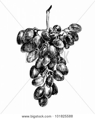 hand drawn black and white bunch of grapes