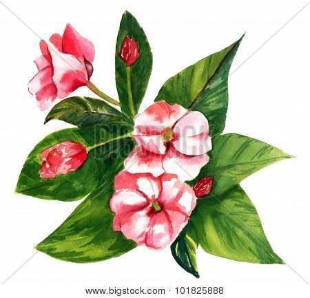 A vintage style watercolour drawing of a pink flower with green leaves on white background