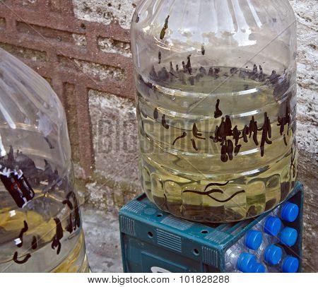 Medicinal Leeches Sellers