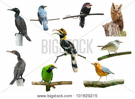 Set Of Birds On White Background