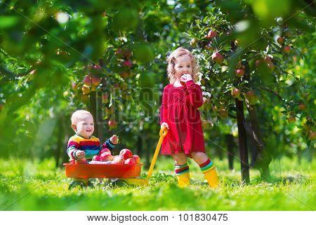 Kids Playing In Apple Tree Garden